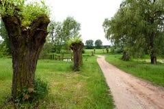 Landschap - dorpsweg Stock Afbeelding