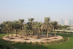 Landschap Doubai van een oase Stock Foto