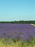 Landschap en lavendel Royalty-vrije Stock Afbeeldingen
