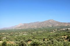 Landschap en Olive Groves in Zuid-Kreta Stock Afbeelding