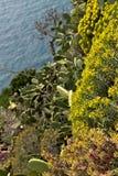Landschap en vegetatie in Cinque Terre royalty-vrije stock afbeelding