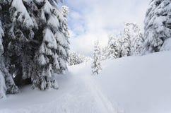 Landschap en verse sneeuw royalty-vrije stock foto