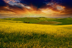 Landschap en Weiden van Toscanië, Lentetijd Stock Afbeeldingen