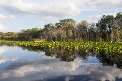 Landschap in Florida royalty-vrije stock foto