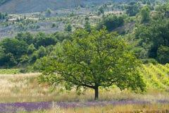 Landschap in Franse Drome Stock Foto's