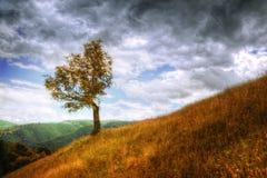 Landschap - geïsoleerd boom en de herfstgras Stock Afbeeldingen