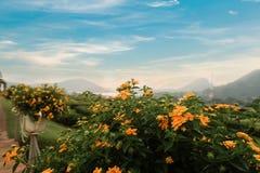 Landschap - Gele bloem Stock Foto