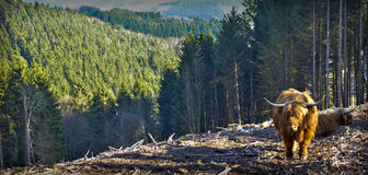 Landschap Hellenthal Royalty-vrije Stock Fotografie