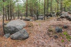 Landschap in het bos Stock Foto's