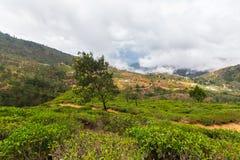 Landschap in het Heuvelland van Sri Lanka Stock Afbeelding