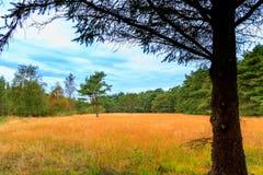 Landschap in het hout Stock Afbeeldingen