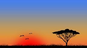 Landschap het met groot scherm van de zonsondergangboom Stock Foto's