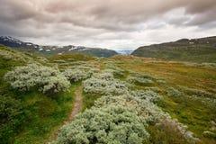 Landschap in het nationale park van Jotunheimen royalty-vrije stock afbeelding