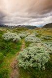 Landschap in het nationale park van Jotunheimen stock afbeelding
