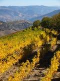 Landschap het Noord- van Portugal met bergen en wijngaarden royalty-vrije stock afbeeldingen