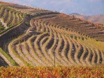 Landschap het Noord- van Portugal met bergen en wijngaarden stock afbeelding