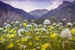 Landschap in het Park van de de Woestijnstaat van Anza Borrego tijdens een de lente super bloei, Californië stock foto's