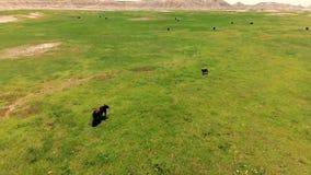Landschap het Zuid- van Dakota Zwarte Heuvels de Zuid- van Dakota Lucht Mening stock video