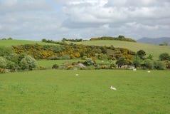 Landschap in Ierland Stock Afbeeldingen