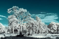 Landschap in infrared Royalty-vrije Stock Afbeelding