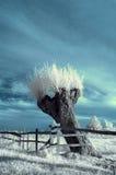 Landschap in infrared Royalty-vrije Stock Fotografie