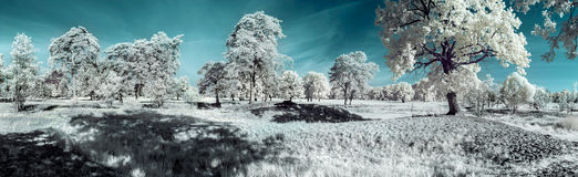 Landschap in infrared Royalty-vrije Stock Foto