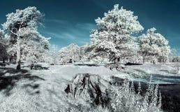 Landschap in infrared Royalty-vrije Stock Afbeelding