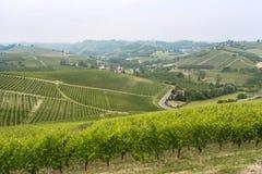 Landschap in Langhe (Piemonte) Royalty-vrije Stock Foto