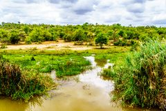 Landschap langs de Olifants-Rivier dichtbij het Nationale Park van Kruger in Zuid-Afrika stock foto's