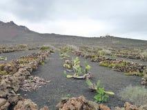 Landschap in Lanzarote Stock Afbeeldingen