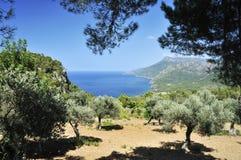 Landschap in Mallorca Royalty-vrije Stock Afbeeldingen