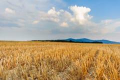 Landschap met balen op gebied bij zonsondergang Royalty-vrije Stock Fotografie
