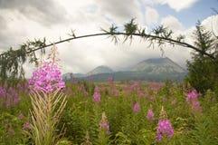 Landschap met berg Stock Afbeelding