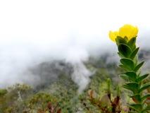 Landschap met bergen, wolken en gele bloem royalty-vrije stock afbeeldingen