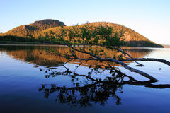 Landschap met berk Stock Afbeeldingen