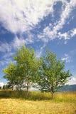 Landschap met berken Royalty-vrije Stock Foto