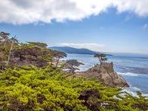 Landschap met beroemde Eenzame Cipres Royalty-vrije Stock Afbeelding