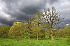 Landschap met bewolkte hemel Royalty-vrije Stock Afbeeldingen