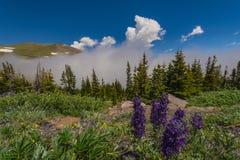 Landschap met blauwe hemel en bomen in Colorado Stock Foto