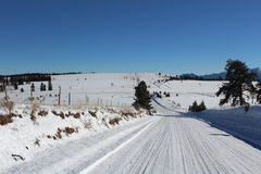 Landschap met blauwe hemel en bomen in Colorado Royalty-vrije Stock Afbeeldingen