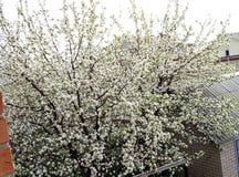 Landschap met bloeiende appelboom royalty-vrije stock foto's
