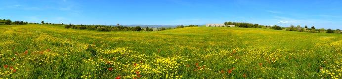 Landschap met bloemrijk Royalty-vrije Stock Foto's