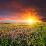Landschap met bloemweide stock afbeelding