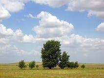Landschap met bomen Royalty-vrije Stock Foto's