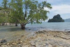 Landschap met bomen en eilanden Royalty-vrije Stock Afbeeldingen