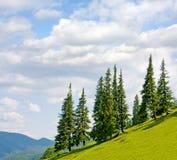 Landschap met bomen op flank van heuvel stock foto's