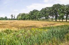 Landschap met bomen, weiden en wildflowers stock foto's