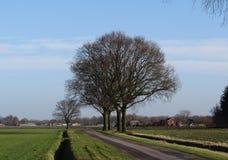 Landschap met bomen zonder bladeren Stock Afbeeldingen