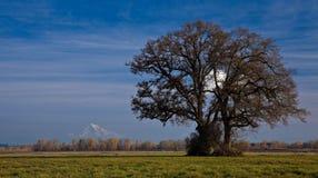 Landschap met boom Royalty-vrije Stock Foto's