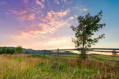 Landschap met boom Stock Foto